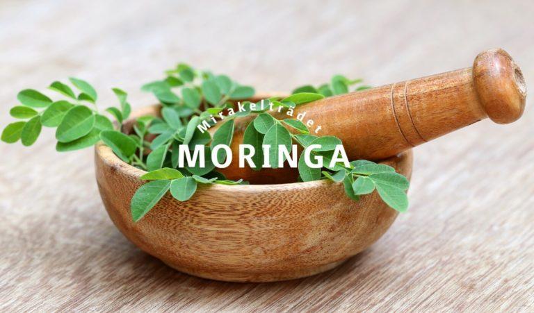 Moringa – Mirakelträdet