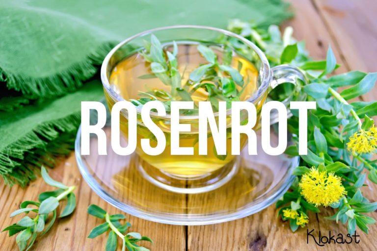 Rosenrot – uppiggande naturläkemedel sedan forntiden